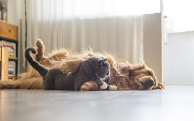 Huisdieren, vlekken en natuursteen: een onmogelijke match?